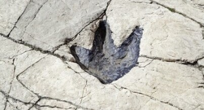 Fun fact: Utah has the largest dinosaur footprints in the world!